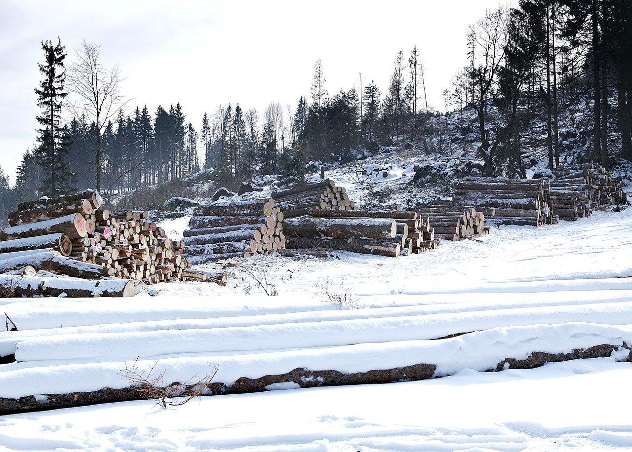 wood, sawmill, slice